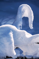 Expressive snow figure resembling an attacking cobra on a tree branch formed by the wind and the sun in the forest after a snowstorm; winter season concept, grace and danger also
