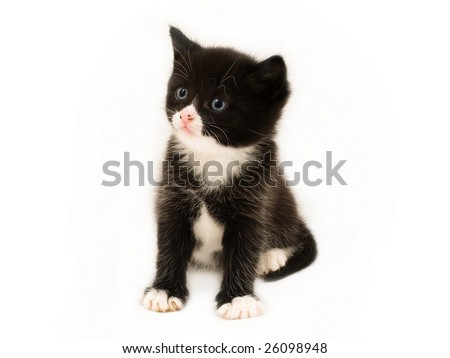 how to create a tuxedo kitten