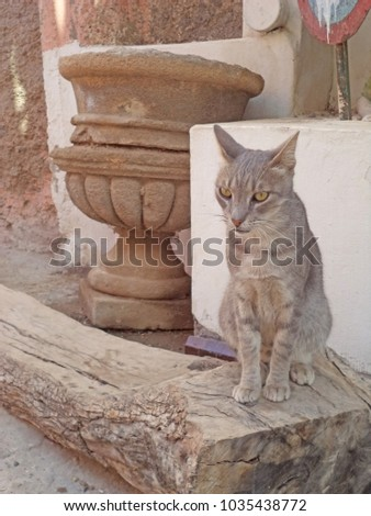 Exquisite and vintage African scene: an elegant grey cat sitting on a background of antique Moroccan vases and stone wall #1035438772