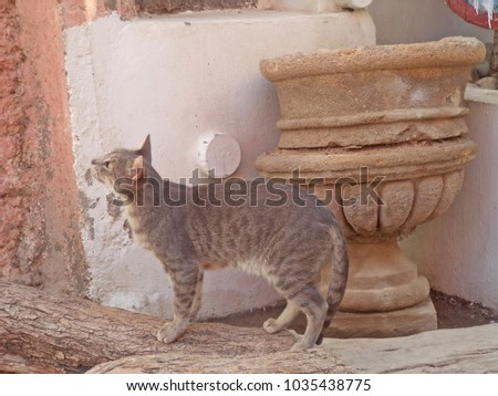 Exquisite and vintage African scene: an elegant grey cat sitting on a background of antique Moroccan vases and stone wall #1035438775