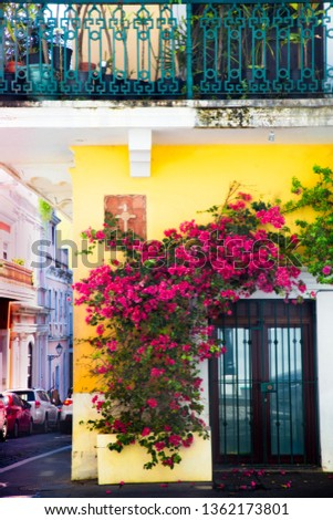 Exterior door covered in flowering vines on yellow building, Old San Juan Puerto Rico
