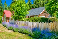 Exteriors of an old farmhouse building with lavender