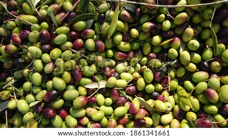 extra virgin olive oil an olive juice Stock photo ©