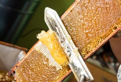 Extracting honey from honeycomb concept. Close up view of beekeeper cutting wax lids with hot knife from honeycomb for honey extraction.