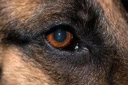 Extreme close up of dog's eye.