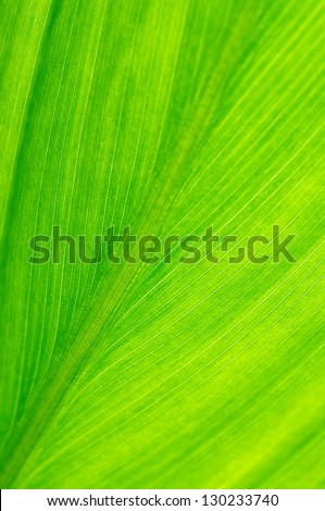 Extreme close-up of fresh green leaf as background.