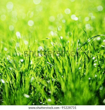 Extreme Close up of green grass with focus point. - stock photo