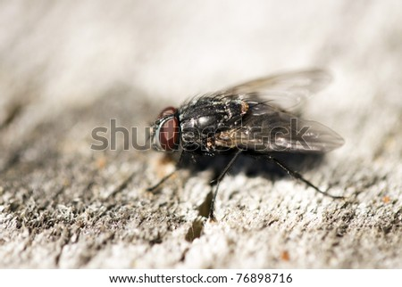 Extreme close-up of House fly #76898716