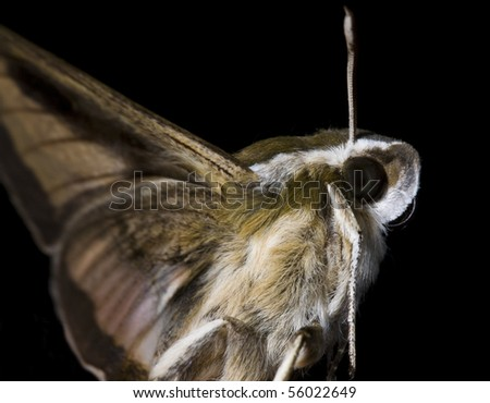 extreme close up of moth on black background