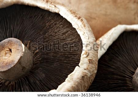 Extreme Close Up of Portobello Mushroom