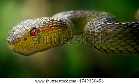 Extreme Close Up of Viper Snake Head - Oil Painting Art Nature Illustration