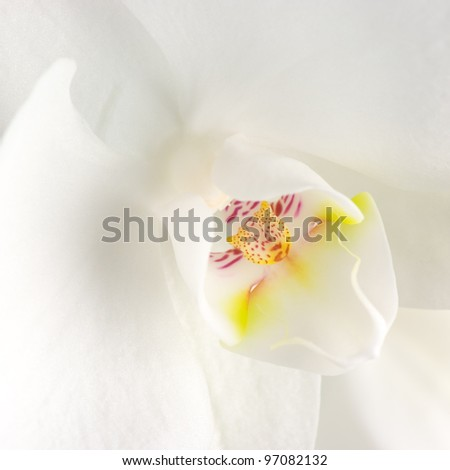 Extreme close-up of white orchid.