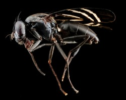 Extreme close-up photo of Insect on black background, Macro insect, close-up photo, insects flies, studio shoot.