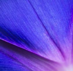 extreme close up shot of natural flower. vivid petal background