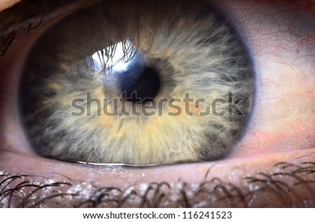 extreme close up to a human eye