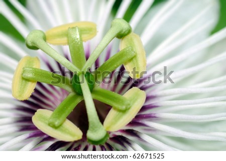 Extreme closeup of the beautiful passion flower