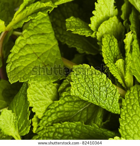 extreme closeup of various fresh mint leafs