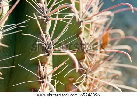 Extreme horizontal close-up of green cactus with pink thorns