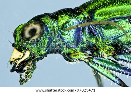 Extreme macro green beetle bug insect - stock photo