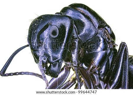 Extreme macro insect