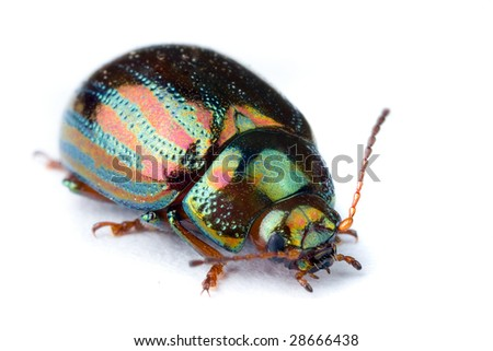 Extreme macro of a beautiful iridescent bug insect