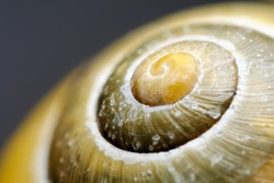 Extreme macro of a colorful snail shell