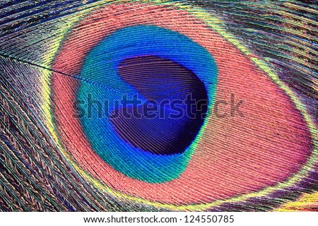 Extreme macro of a Peacock feather.