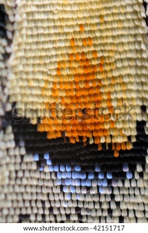 Extreme macro of Swallowtail butterfly wing
