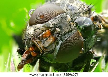 Extreme macro photo a fly