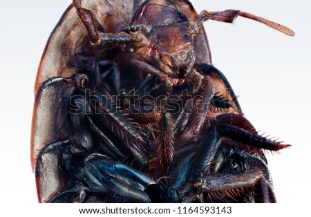 Extreme macro photo of a brown wood louse.