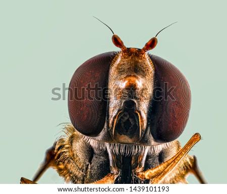 Extreme Macro Photography of insects  #1439101193