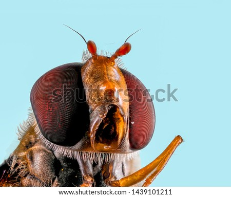 Extreme Macro Photography of insects  #1439101211