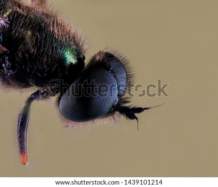 Extreme Macro Photography of insects  #1439101214