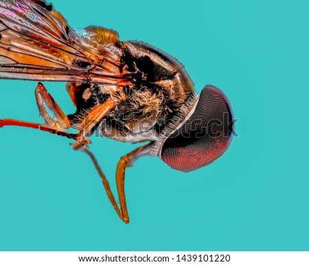 Extreme Macro Photography of insects  #1439101220