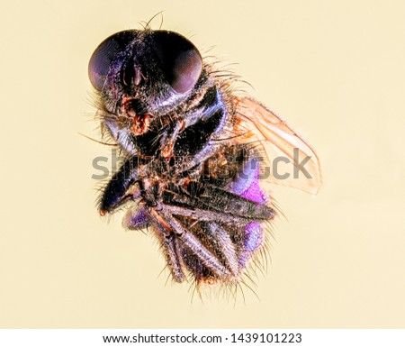 Extreme Macro Photography of insects  #1439101223