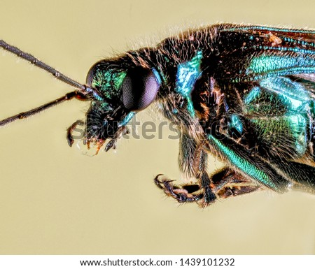 Extreme Macro Photography of insects  #1439101232