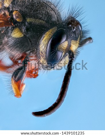 Extreme Macro Photography of insects  #1439101235