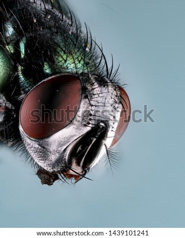 Extreme Macro Photography of insects  #1439101241
