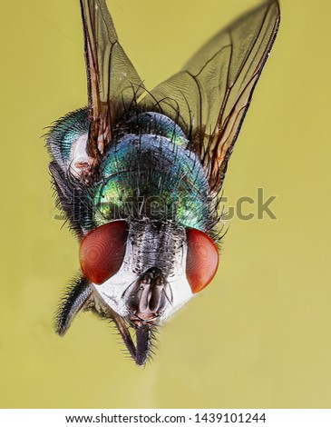 Extreme Macro Photography of insects  #1439101244