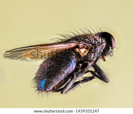 Extreme Macro Photography of insects  #1439101247