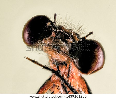 Extreme Macro Photography of insects  #1439101250