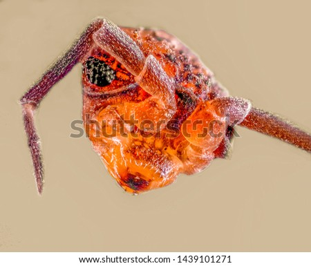 Extreme Macro Photography of insects  #1439101271