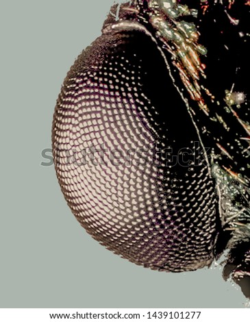 Extreme Macro Photography of insects  #1439101277