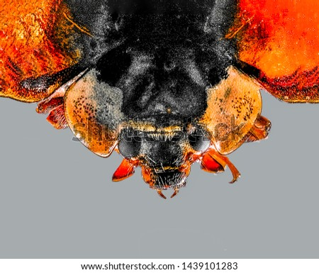 Extreme Macro Photography of insects  #1439101283
