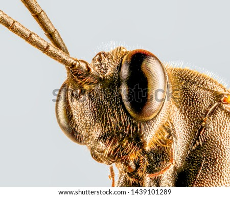 Extreme Macro Photography of insects  #1439101289