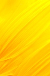 Extreme macro shot. Abstract background with sunflower petals