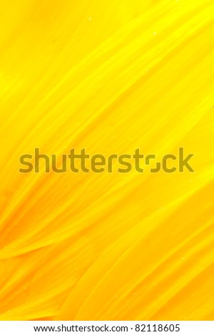 Extreme macro shot. Abstract background with sunflower petals #82118605