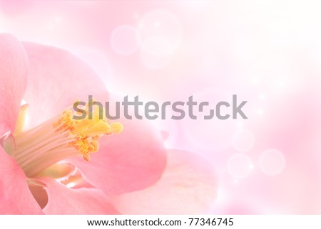 Extreme macro shot of a flower with gentle spring background.