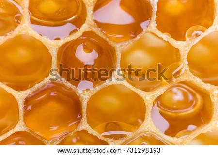 Extreme macro shot of a honey filled honeycomb