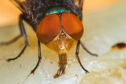 Extreme macro shot the eye of insect fly
